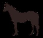 Freizeit mit Pferd